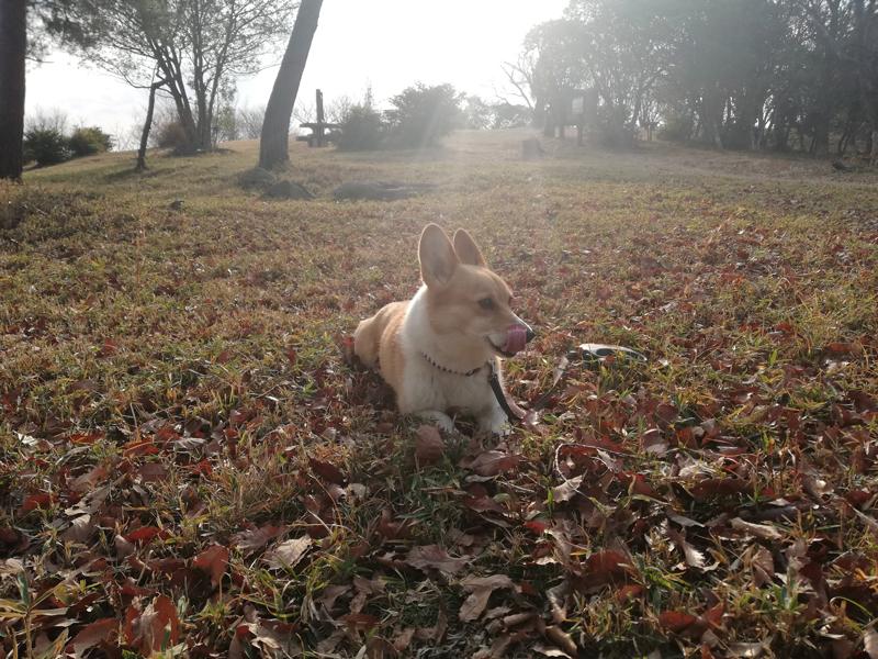 岡山の探偵犬 浮気調査専門の探偵社の看板犬