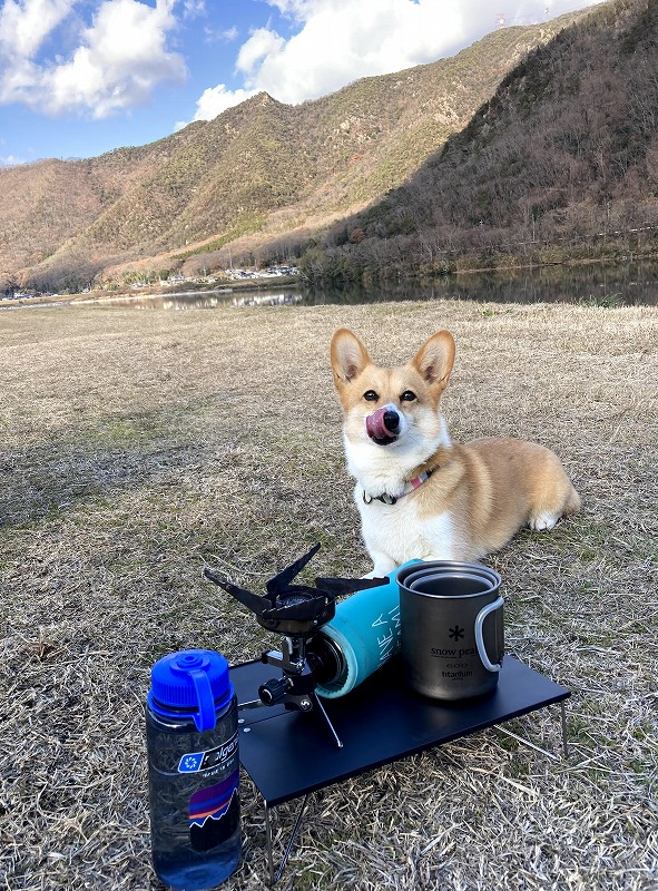 岡山の探偵犬 コーギー部長